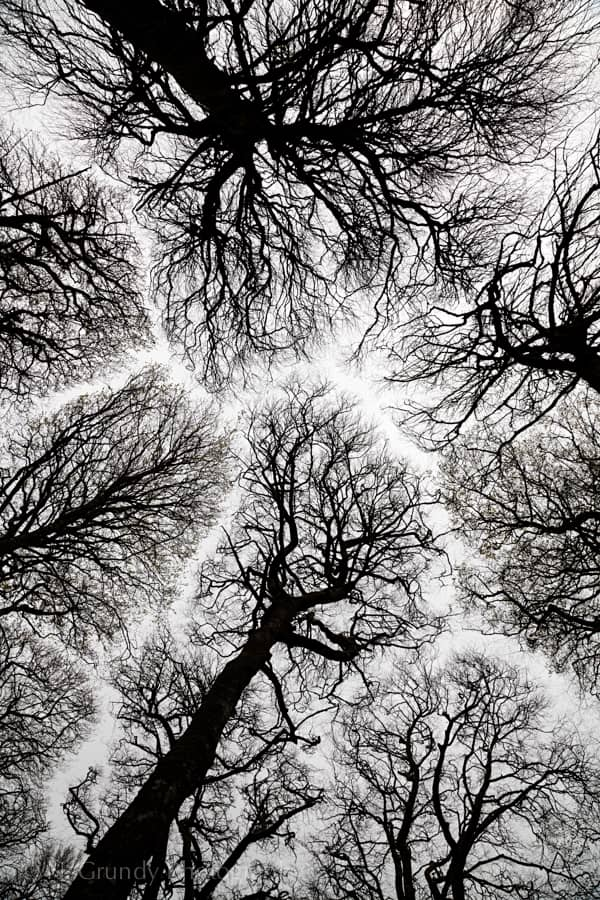 Crown Shyness Winter Trees Photo