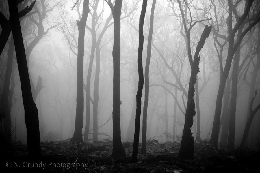 Black Saturday Victorian Bushfires 2009