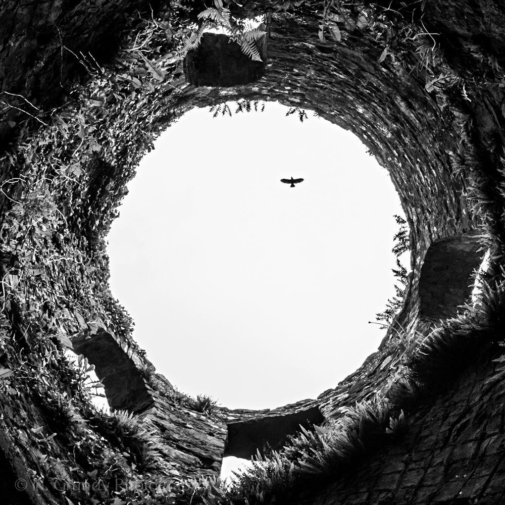 Boyle Abbey Crow by Irish Photographer