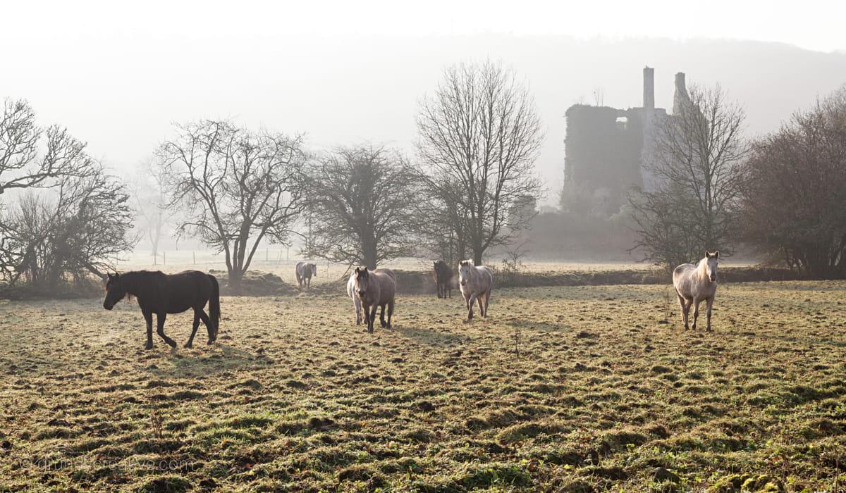 Castlehackett Horses Ireland Photo