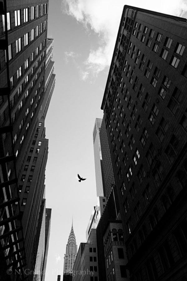Chrysler Crow