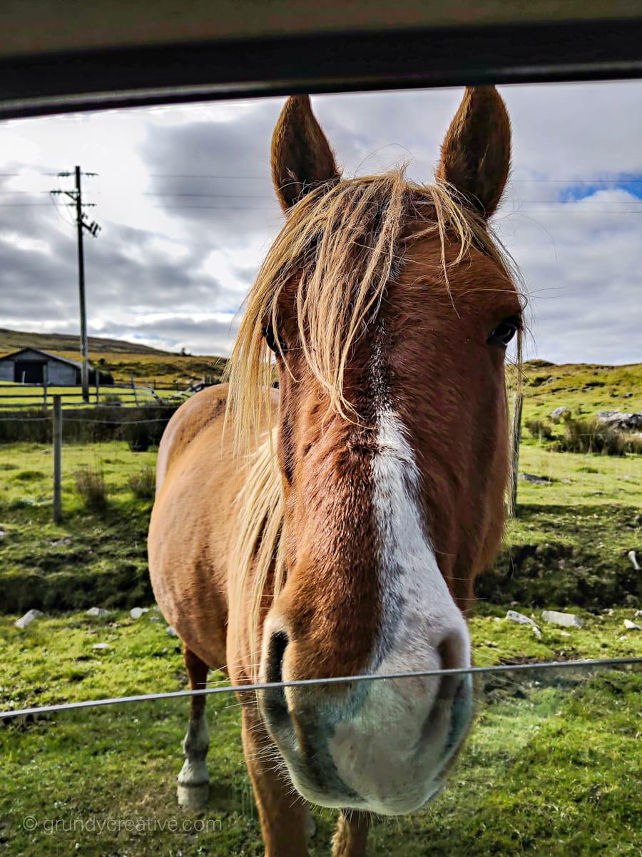Curious Horse in Ireland Photo