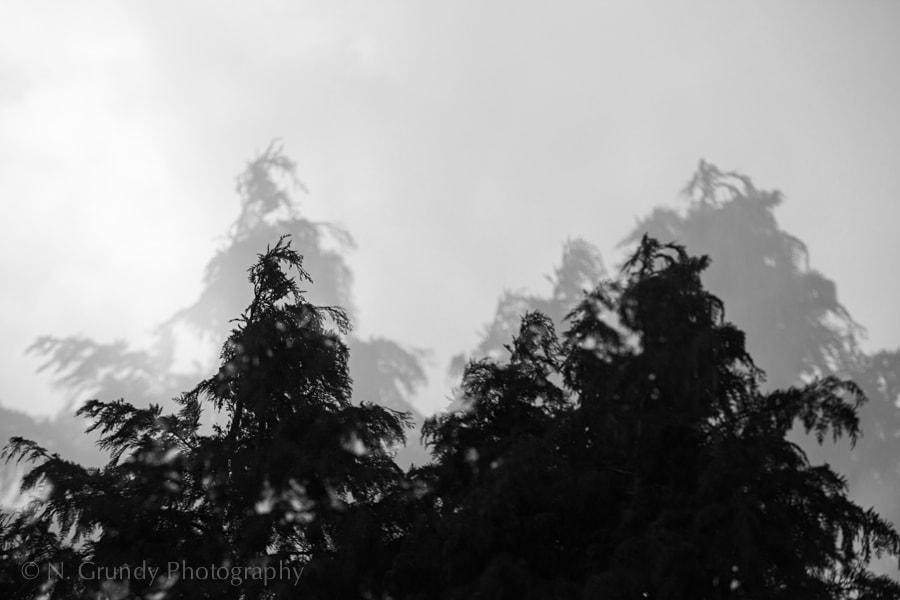 Double Exposure Trees Photo