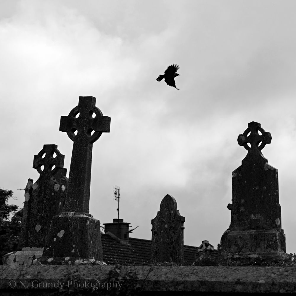 Photo of Crows at Cemetery in Galway