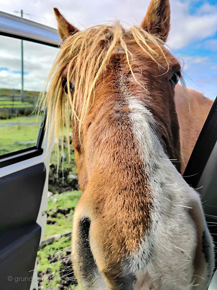 Inquisitive Irish Horse Photo