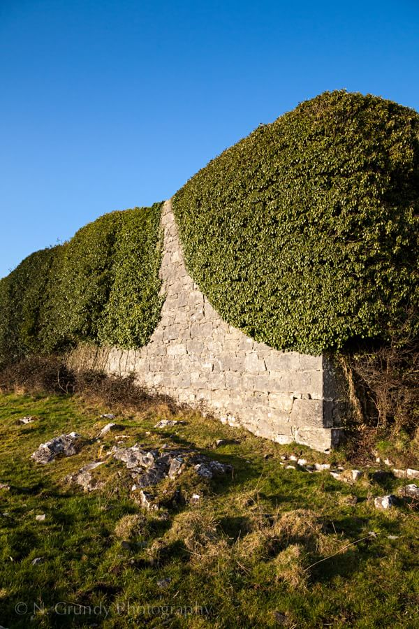 Photo of Ivy on Castle Wall in Ireland