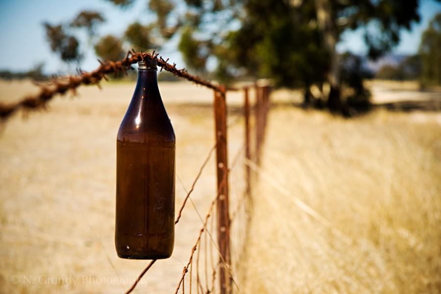 King Brown Longneck Beer Australia