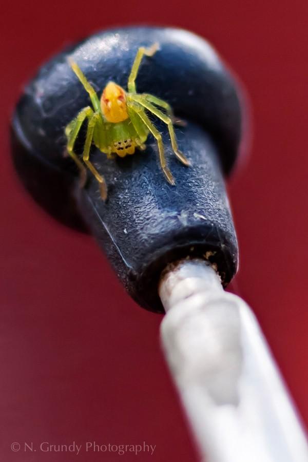Antenna Spider