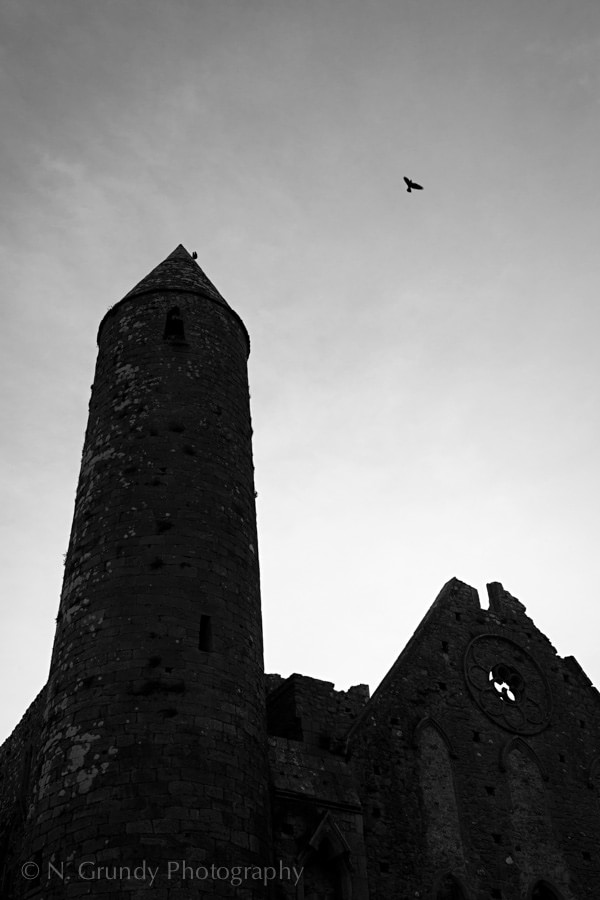 Rock of Cashel Crow Photo by Nicholas Grundy Photography