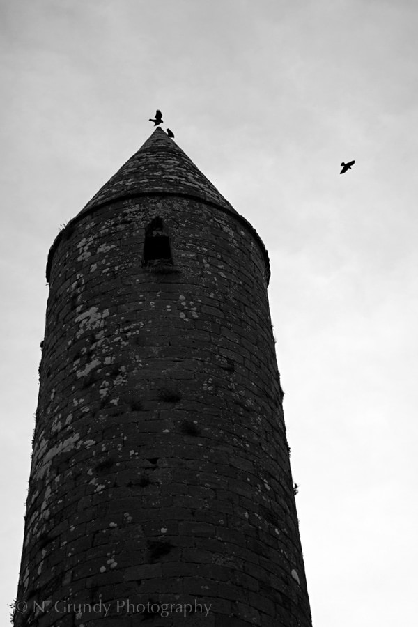 Crows above Rock of Cashel