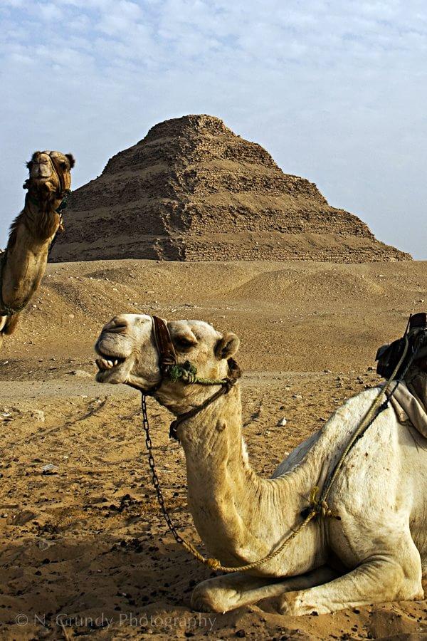 Samara Camels