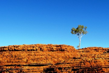 Lone Tree, Watarrka / King's Canyon