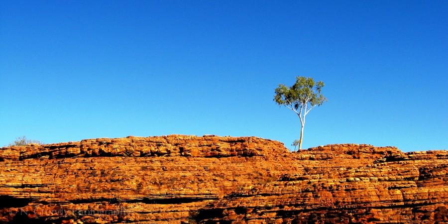 Lone Tree, Watarrka / King's Canyon